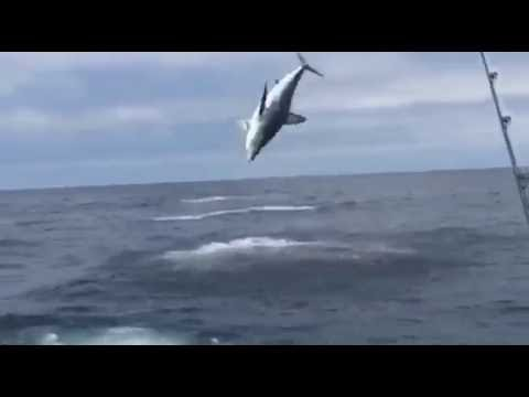 Fishermen Left In Disbelief As Hooked Shark Jumps Through The Air