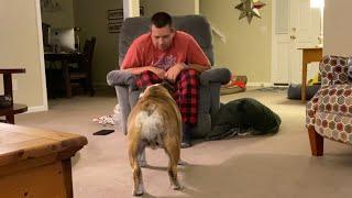 Reuben the Bulldog: The Dance