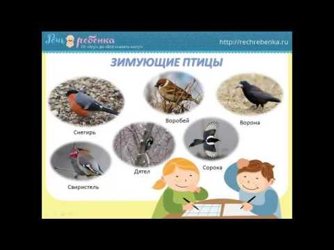 Синичкин праздник. Презентация для детей про птиц-синиц.