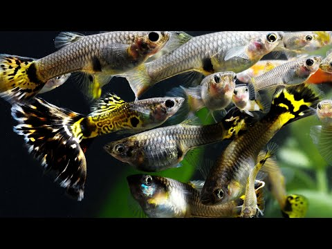 What Are The Best Fish To Breed?​ | Secrets Of Breeding Fish For Profit (Part 1)