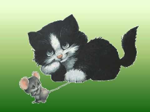 Ide maca oko tebe