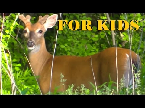 FOR KIDS - Farm - Wild Animals and Lots of Fun For Kids !