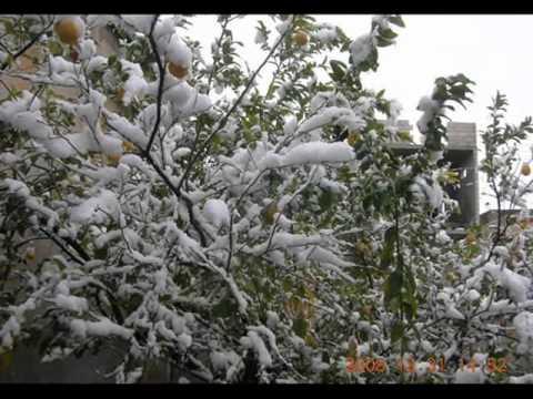 aleppo snow 31/12/2008