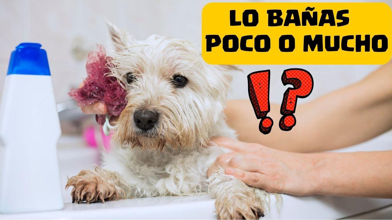 Cada cuanto se debe ba ar un perro cachorro frecuencia del ba o de un cachorro jose arca - Cada cuanto banar a un perro ...