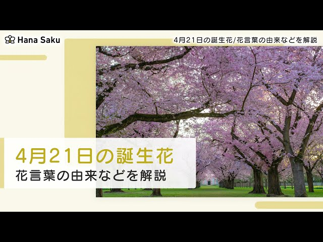 月 花 4 誕生 21 日 4月20日の誕生花(おすすめ名言や花言葉)何の日