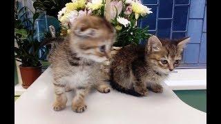 Бездомные котята.Рада и Мышка
