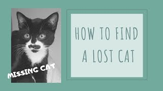 What to do if your Cat goes Missing  - How to find a Lost Cat