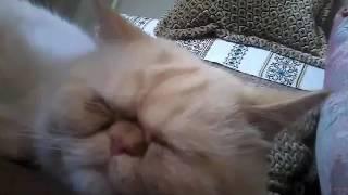 Моему коту плохо