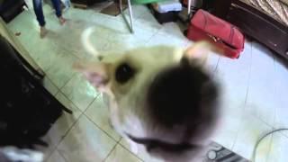 CUIDADO video de Sndor Gonzlez Galera Transentes 2015