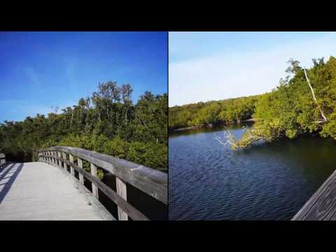 Travel Guide: Florida-Robinson Preserve
