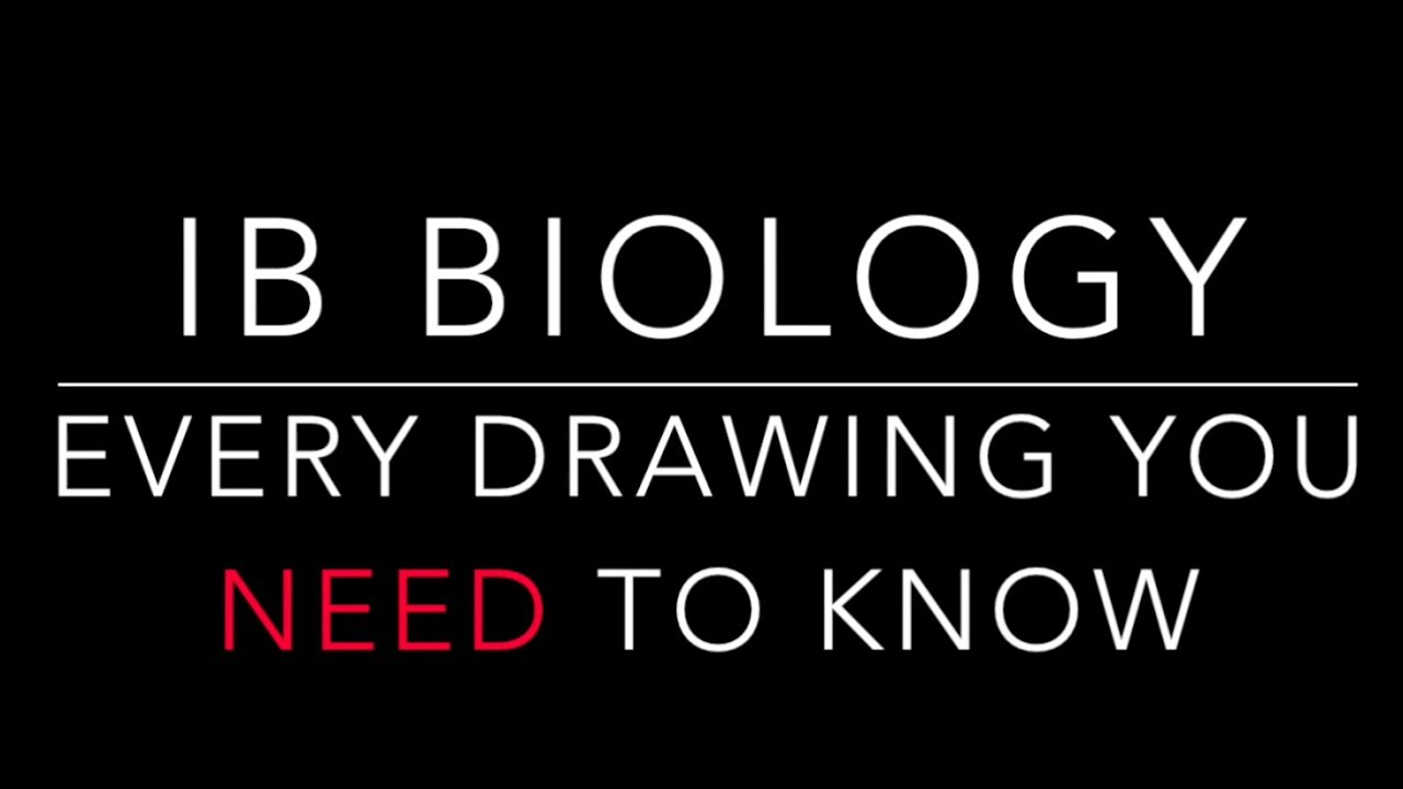 every ib biology drawing you need to know