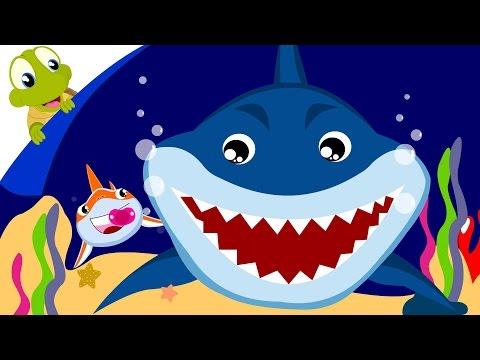 Baby Shark Song   Animal Songs with lyrics