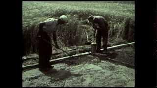 VÖGELE JUNIOR-Zug, 60er Jahre