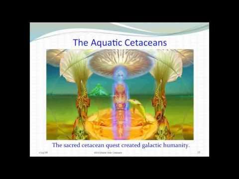 Sheldan Nidle PAO Webinar 71 Preview: Aquatic Cetaceans