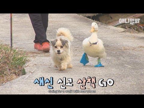 싱글맘 개를 짝사랑하는 수컷 오리♥