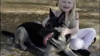 Dogs Saved By Austin German Shepherd Rescue