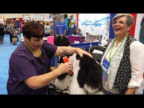 Prepping a Standard Poodle for Asian Fusion and Clipper Tips with Lisa Leady and Sue Watson