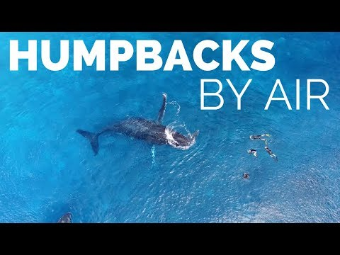 Humpback Whales By Air in Tonga