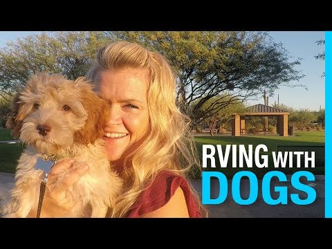 RVING WITH DOGS 🐶 RV LIFE WITH PETS
