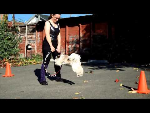 Training with Peta and Ra!: Hoops, Dog Dancing, Dog Tricks