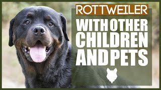 ROTTWEILER WITH OTHER CHILDREN AND PETS