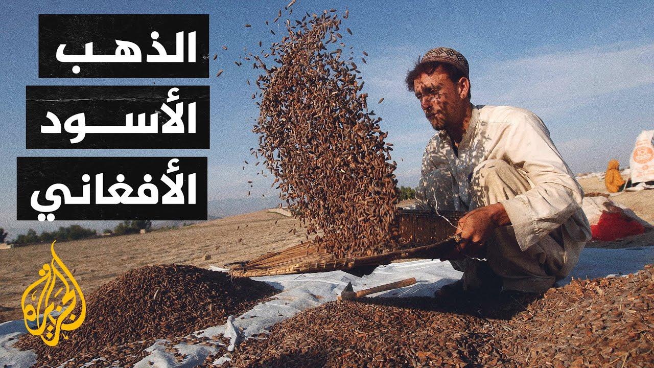 الصنوبر.. الذهب الأسود الأفغاني يواجه صعوبات في التصدير  - نشر قبل 13 ساعة
