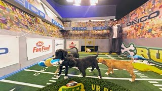 Marley Makes His Move | Puppy Bowl XII (360 Video)
