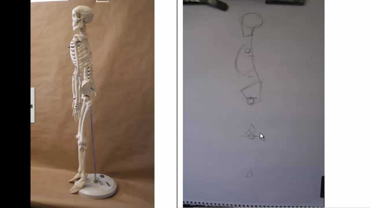 Drawing And Proportions Of The Human Skeleton Side View Youtube