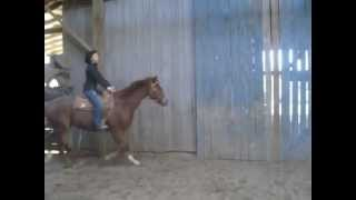 The Ultimate News -2010 Sorrel Quarter Horse Gelding