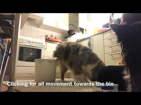 Hind leg lift with Haven