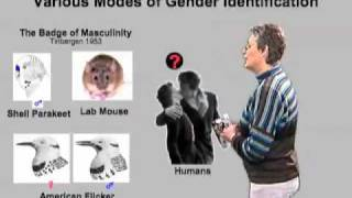 Catherine Dulac (Harvard Univ) Part 2:Molecular Biology of Pheromone Perception