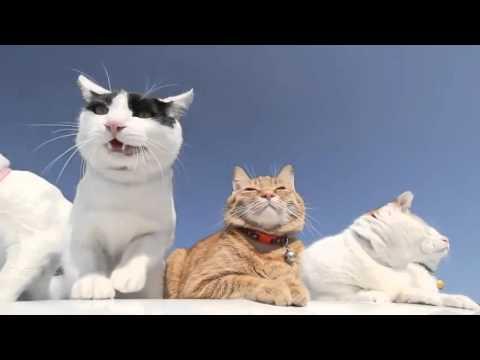 Lustige Katzen Compilation #23