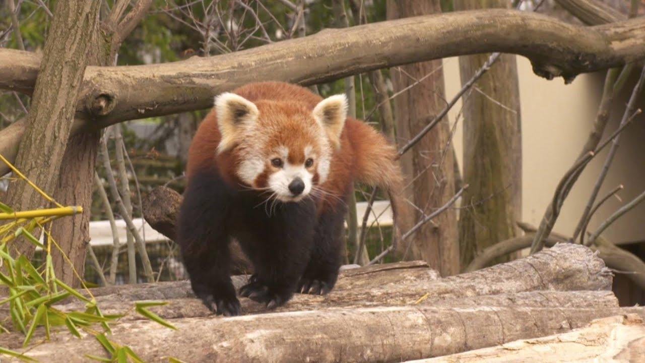 Le parc des Pyrénées au plus près des animaux sauvages