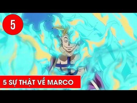 Top 5 điều thú vị về phượng hoàng Marco trong One Piece