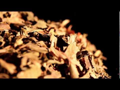 Object 18  Al Sidr Leaves
