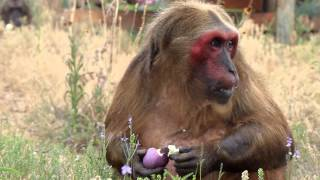 Easter at the Born Free USA Primate Sanctuary