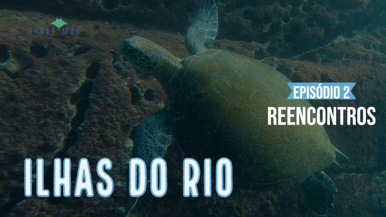 Ilhas do Rio Webserie #2 - Reencontros com as tartarugas marinhas