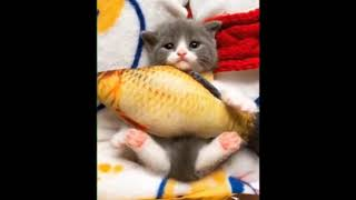 Cute is Not Enough Funny Cats and Dogs Compilation 56