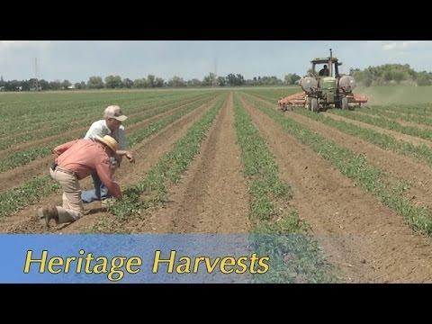 Growing California video series: Heritage Harvests