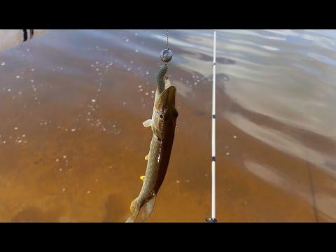 Рыбалка на реке Тавда, окунь клюет на каждом забросе