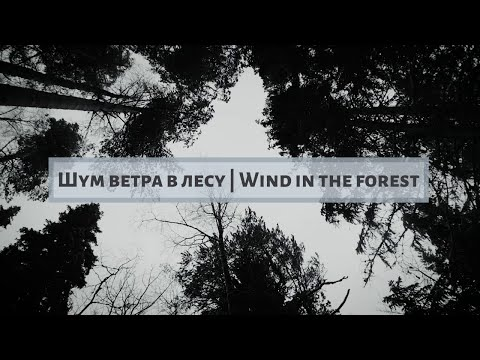Шум ветра в лесу | Wind In The Forest