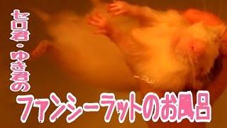皮膚病にかかりやすそうな子はなるべく1ヶ月に一度はお風呂に 入れるよ...