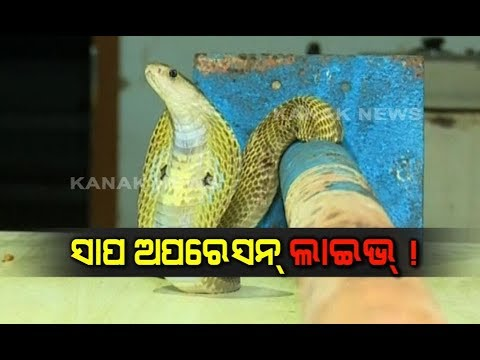 Snake Stuck In Pipe, Rescued By Snake Helpline In Bhubaneswar