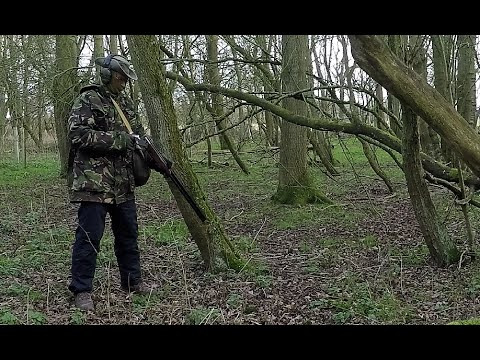 Pigeon shooting in an English woodland