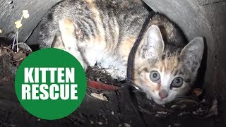 Tiny kitten is rescued after being trapped 44 feet underground