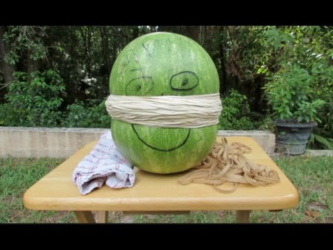 EXTREME EXPLODING WATERMELON WITH RUBBER BANDS YouTube