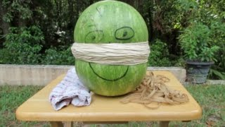 EXTREME EXPLODING WATERMELON WITH RUBBER BANDS