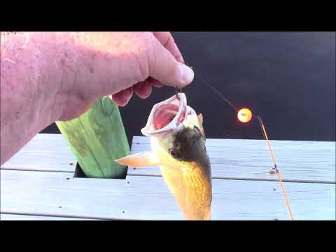Dock Fishing In Bel Haven North Carolina.  Pungo River