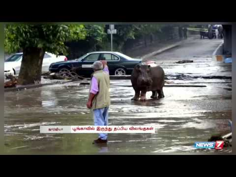 Deadly zoo animals roam streets in flood hit Georgia | World | News7 Tamil |