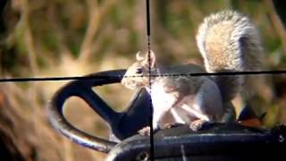 Air Rifle Hunting (Squirrel pest control) #2 #3